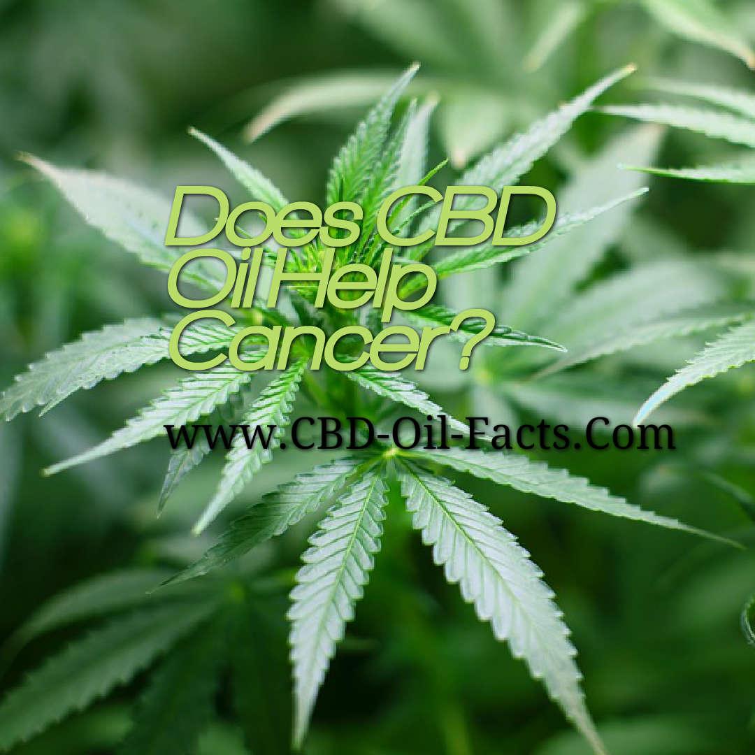 Does CBD Oil Help Cancer?