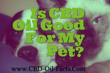 Is CBD Oil Good For My Pet?